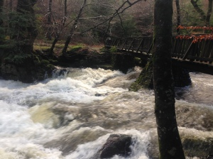 Raging white water in the Shimna River, Tollymore.
