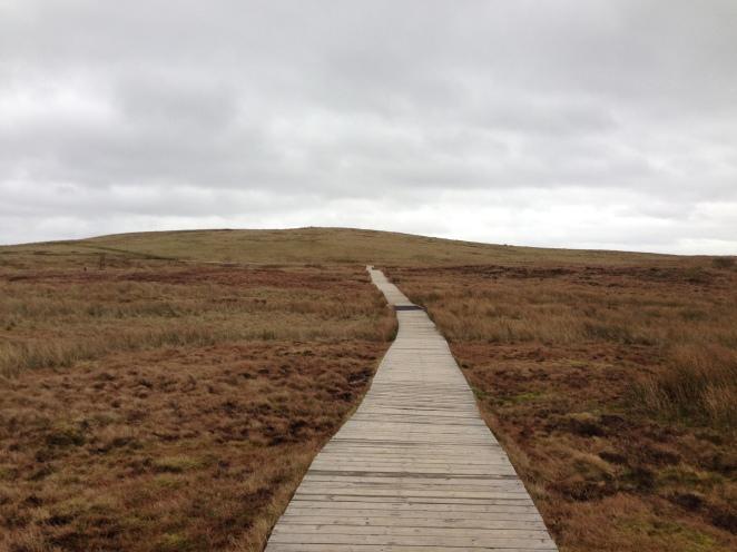 Board walk leading to great views of Belfast city